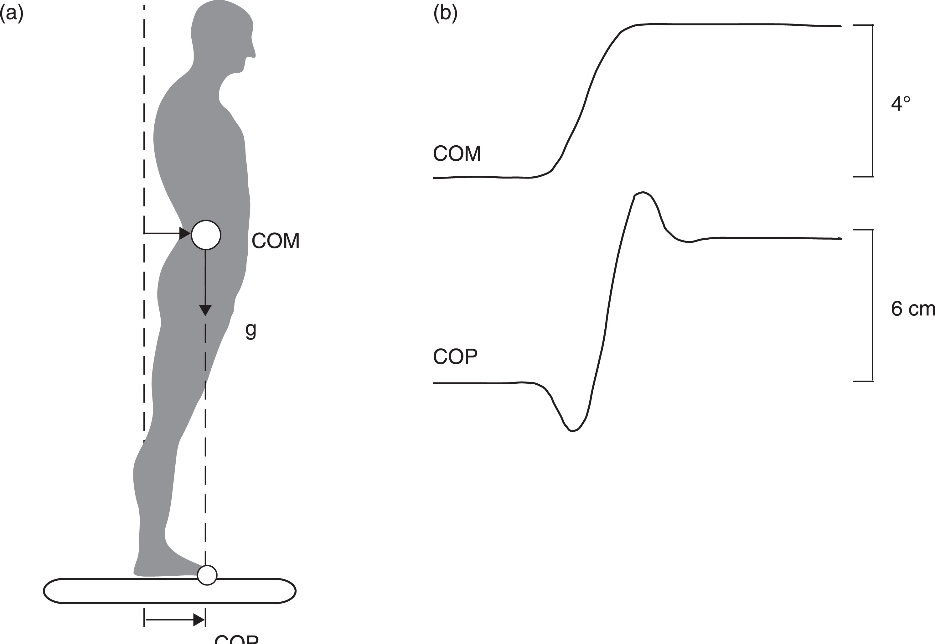 Schematic representation of center of mass, COM, and center of pressure, COP. (a) During a static body lean forward, the COM's projection to the support surface determines the COP. (b) During active lean (dynamic condition), the COP also contains the ground reaction force that is generated to accelerate and decelerate the COM.