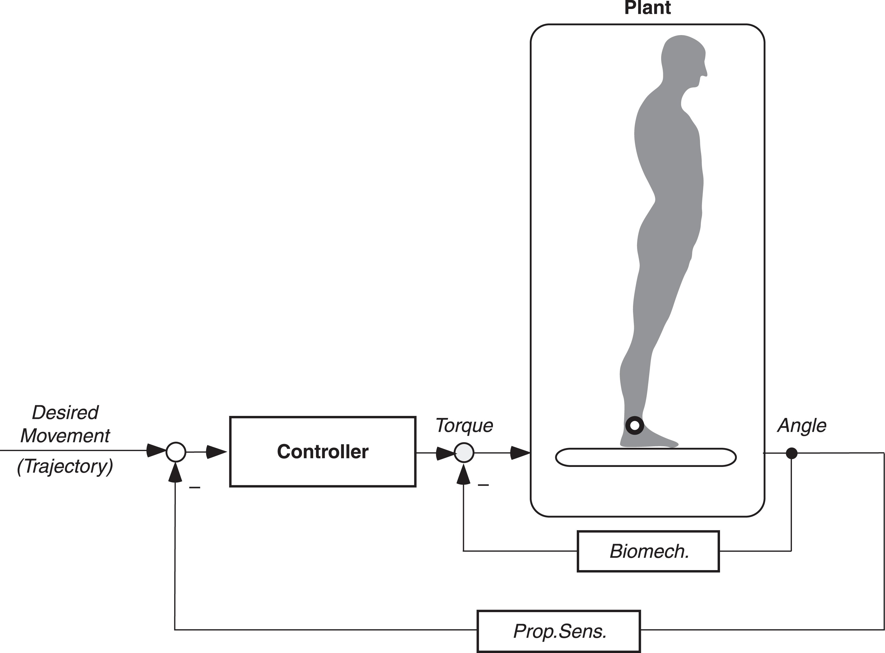 Servo control model. The desired movement is driven by error-sensing 'reflexive' negative feedback. Biomech., instrinsic (passive) muscle stiffness and damping. Prop.Sens., proprioceptive sensor of joint angle (here of ankle joint). Given feedback and controller parameters are adjusted to plant dynamics, the loop compensates for body inertia when performing the desired movement trajectory.
