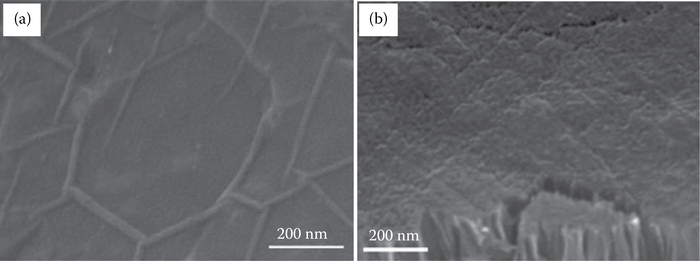SEM images of (a) the graphite coating formed on Si face. (b) Dense CNT forest formed on the C-face by vacuum annealing for 4 h at 1900°C in a low vacuum.