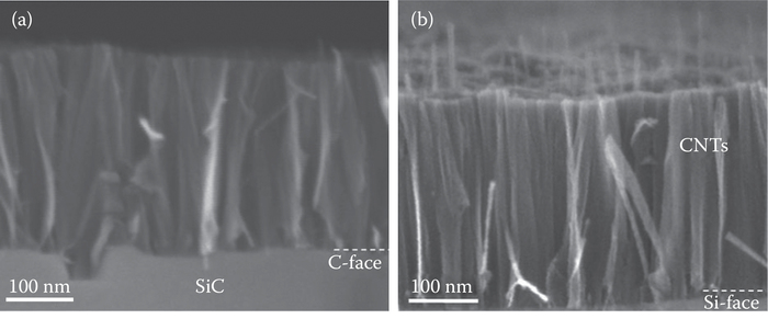 SEM micrographs of CNTs formed (a) on the C-face with a thickness of 400 nm and (b) on the Si-face with a thickness of 310 nm by annealing for 4 h at 1700°C in CO