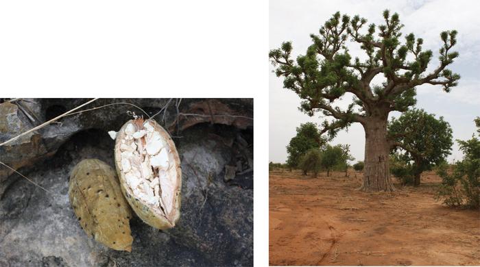 Handbook of African Medicinal Plants